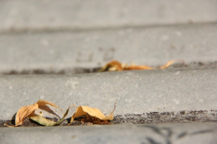 fall_brown-leaves-on-pavement